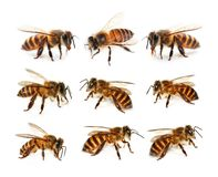 Set of bee isolated on white background stock image