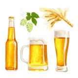 Set of beer bottle, mug and glass, malt, hop Royalty Free Stock Photo