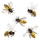 Set of bees. Isolated on white vector illustration