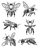 Set of bees. Monochrome design of six bees vector illustration