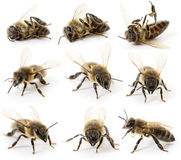 Set of bees Royalty Free Stock Photo