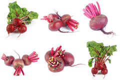 Set of beet roots Royalty Free Stock Photos