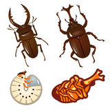 Set of beetles and stag beetles Royalty Free Stock Photo