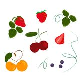 set of berries cherry cherry sweetheart blueberries royalty free illustration