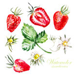 Set with berries and flowers of strawberry Royalty Free Stock Photos
