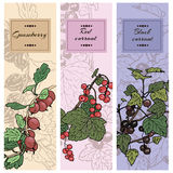 Set of berries. Red currant, black currunt, gooseberry. Hand drawn vector illustration banners Stock Photos