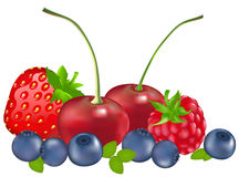 Set Of Berries. Vector Royalty Free Stock Photo
