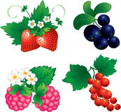 Set of berry. Set of berries, raspberry, currant, strawberry, blueberry Stock Image