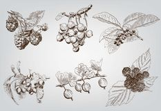 Set of berry. Berry. set of six vector sketches handmade vector illustration