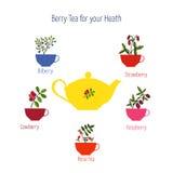 Set of berry teas. Raspberry tea, strawberry tea, bilberry tea, cowberry tea rose hip tea Royalty Free Stock Images
