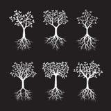 Set Biali drzewa z korzeniami również zwrócić corel ilustracji wektora Zdjęcie Royalty Free