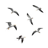 Set of big flying seagulls isolated on white royalty free stock photos