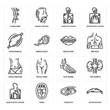 Set of Big Moustache, Human Eye, Blood Supply System, Foot Bones, Abdomen, Mouth Open, Muscle, Digestive Spine icons. Set Of 16 simple  icons such as Big Stock Photo