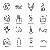Set of Big Moustache, Human Spine, Men Back, Bone, Hand Palm, Broken Skull, Bladder, White blood cell icons. Set Of 16 simple  icons such as Big Moustache, Human Royalty Free Stock Photography