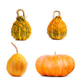 Set the big yellow pumpkin on isolated background Royalty Free Stock Images