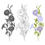 Set of bindweed isolated on white background. Hand drawn  Royalty Free Stock Photos
