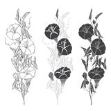 Set of bindweed isolated on white background. Hand drawn  Royalty Free Stock Photography