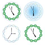 Biological clock Stock Images