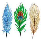 Set of bird feathers. Vector illustration for set of bird feathers on white backdrop royalty free illustration