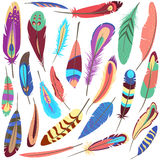Set of bird fluffy and colorful feather Royalty Free Stock Images
