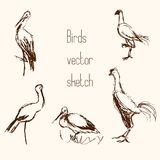 Set of bird pencil sketches. On beige background Royalty Free Stock Images