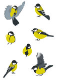 Set of Birds. Birds collection. Swift Little birdies Royalty Free Stock Photo