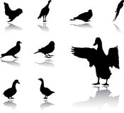 Set Birds Stock Images