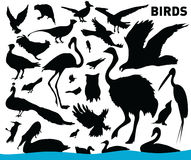 Set of birds. Vector illustration of various birds Royalty Free Stock Images