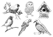 A   set of birds and a birdhouse Royalty Free Stock Images