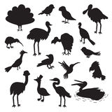 Set of birds black silhouettes. Vector illustration, isolated on a white background Stock Photos