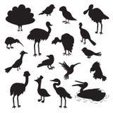Set of birds black silhouettes. Stock Photos