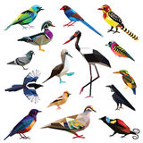 Set of birds. Birds-set colorful birds low poly design isolated on white background Royalty Free Stock Photo