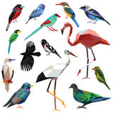 Set of birds. Birds-set colorful birds low poly design isolated on white background Royalty Free Stock Images