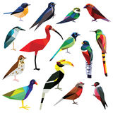 Set of birds. Birds-set colorful birds low poly design on white background Stock Photos