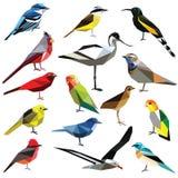 Set of birds. Birds-set colorful birds low poly design on white background Stock Photos