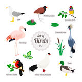 Set of birds royalty free illustration