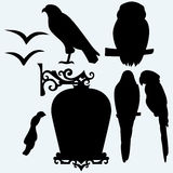 Set Birds: eagle, owl, parrots and seagulls Royalty Free Stock Photography