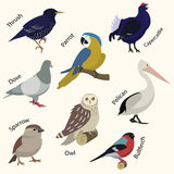 Set of birds. Flat style. vector illustration Royalty Free Stock Photos