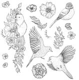 Set of of birds and flowers. Line drawings, ink drawing, hand drawn illustration Royalty Free Stock Photos