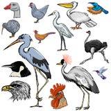 Set of birds Royalty Free Stock Photo