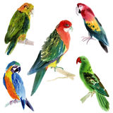 Set of birds parrots. Watercolor illustration in white background. Royalty Free Stock Photography