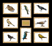 Set birds postage stamps Stock Photo