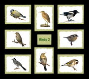 Set birds postage stamps Royalty Free Stock Image