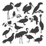 Set of birds` silhoettes vector illustration