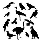 Set of Birds Silhouettes Vector Illustration. Set of birds silhouettes vector. Fauna template. Illustration for nature concepts, compositions, pet shop royalty free illustration