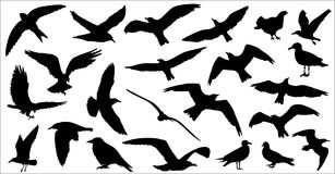 Set of birds silhouettes 23 in 1 on white background. Vector illustration Stock Photography