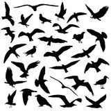 Set of birds silhouettes 30 in 1 on white background. Vector illustration Royalty Free Stock Image