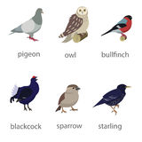 Set of birds. Starling, owl sparrow bullfinch Royalty Free Stock Images