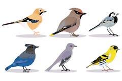 Set of birds Royalty Free Stock Photography