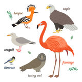 Set of birds. Vector illustration of different colorful birds. Flamingo, seagull, american eagle, titmouse, grey owl and hoopoe.  on white background. Flat Stock Image